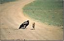 Murmeltier und Adler